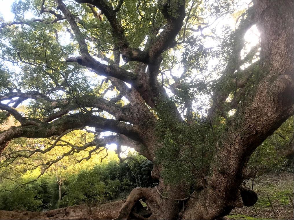 木の幹  低い精度で自動的に生成された説明